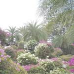Nong Nooch Tropical Garden Gay Paradies Pattaya